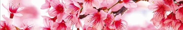 Tableau Branche de Cerisier, Oh mon tableau.com